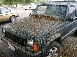 pulubird-poop-art-car3