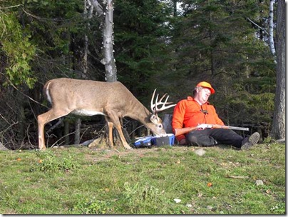 funny-deer-picture-sleeping-hunter-outdoors-smart-animal-stealing-food1